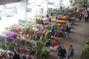 13marché aux fleurs 2015